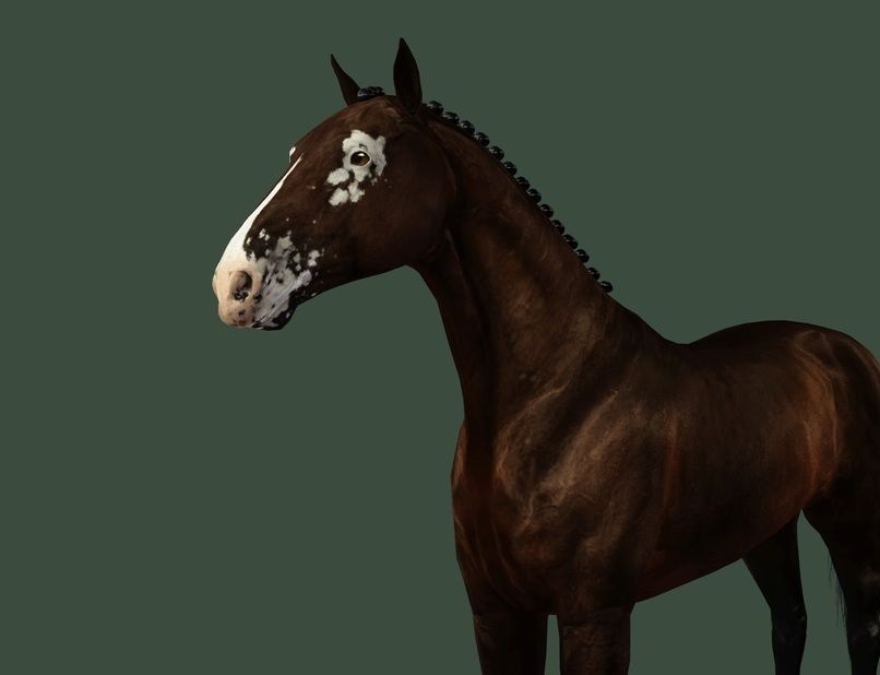 horse with vitiligo